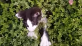 Peek-a-Boo Bush of Kittens